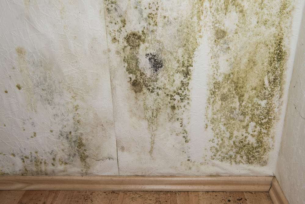 Where can I find mold remediation equipment in Florida?