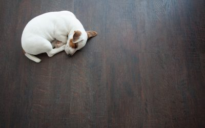 Commercial Cleaning Equipment Florida | The Secrets to Beautiful Hardwood Floors
