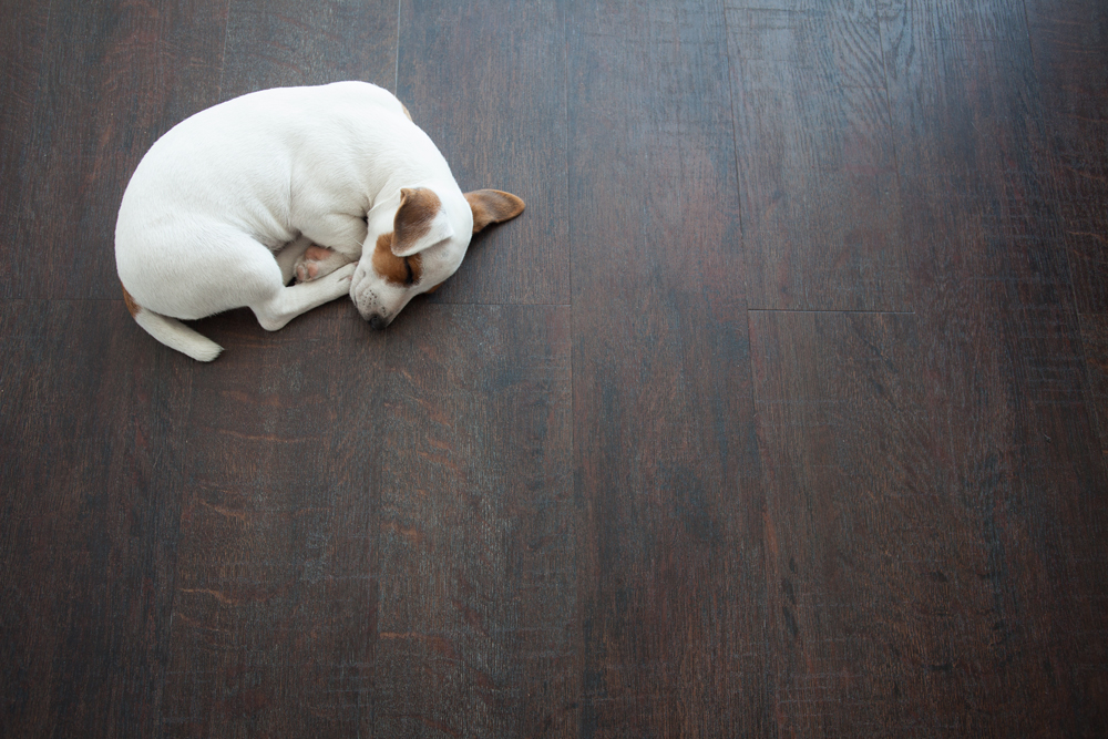 Best Household Cleaning Supplies | Eliminating Pet Odors