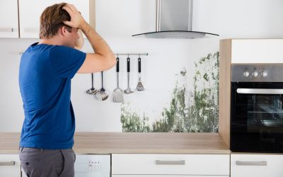 Mold Remediation Equipment in Florida | How to Tackle Mold