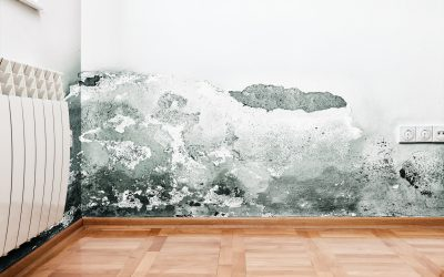 Water Damage Equipment Florida | What are the Effects of Water Damage?