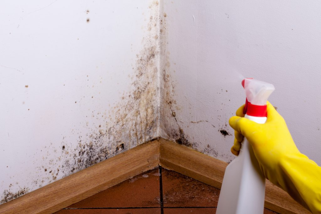 who offers good water damage equipment florida?